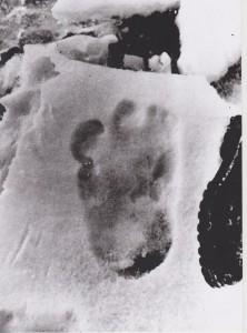 Den afskyelige snemands fodaftryk