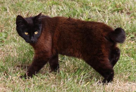 Efter tålmodig venten fik jeg billedet af den haleløse kat og undgik dermed photoshop. Foto: P.H. Seifert.